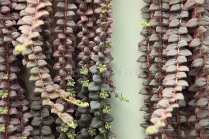 succulents stock afbeeldingen