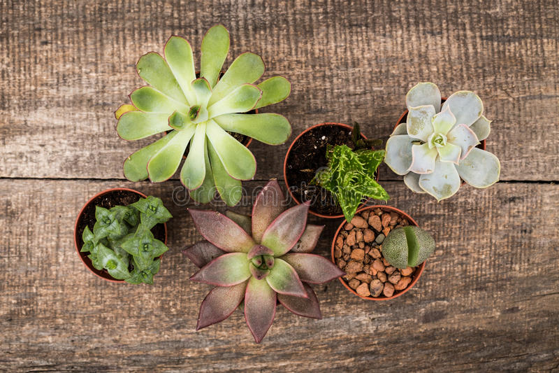 succulents royalty-vrije stock fotografie