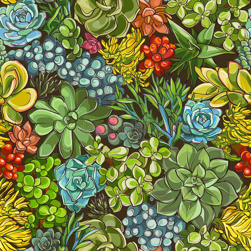 succulents stock illustratie