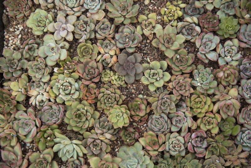 succulents stockbild
