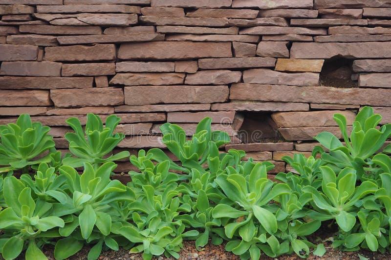succulents στοκ εικόνα με δικαίωμα ελεύθερης χρήσης