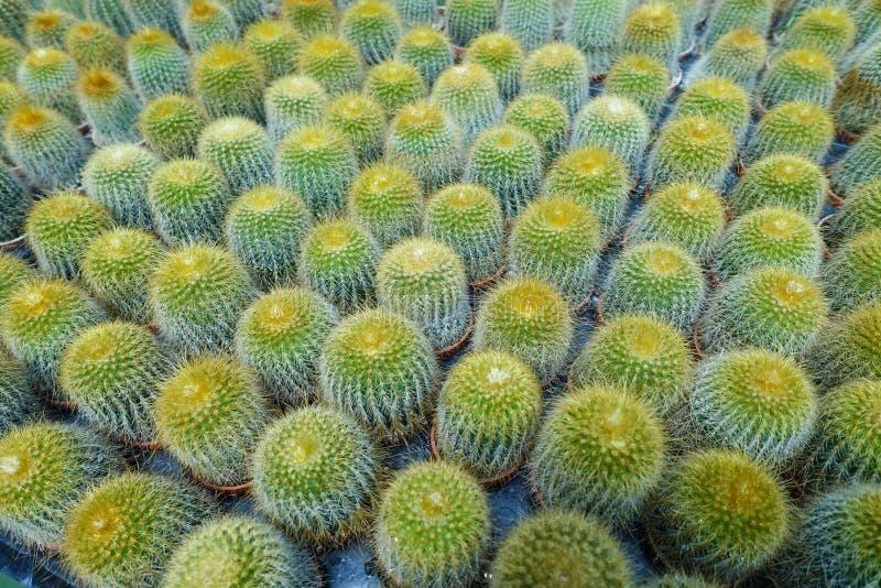 succulents imagem de stock