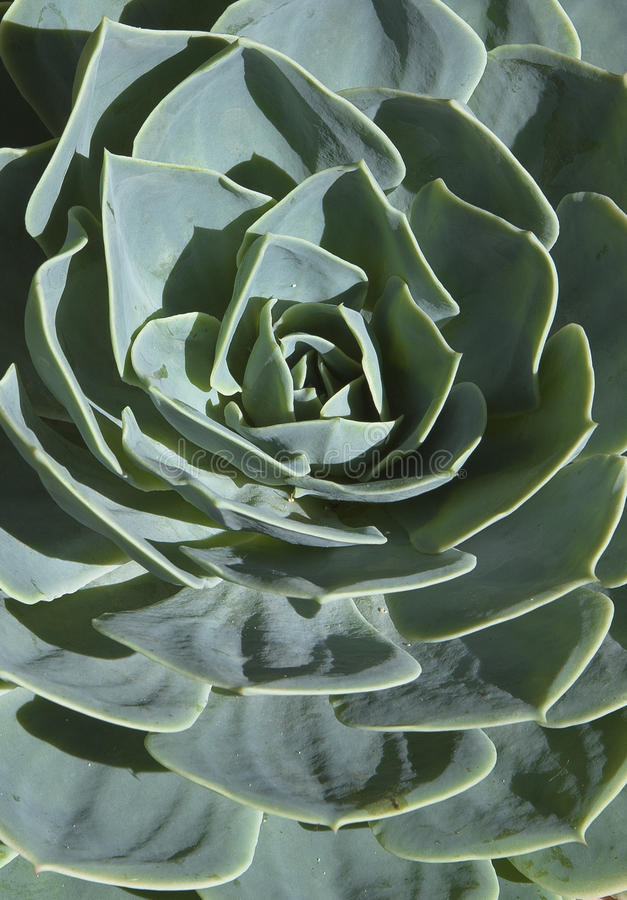 Succulents in Andalusia V royalty-vrije stock fotografie