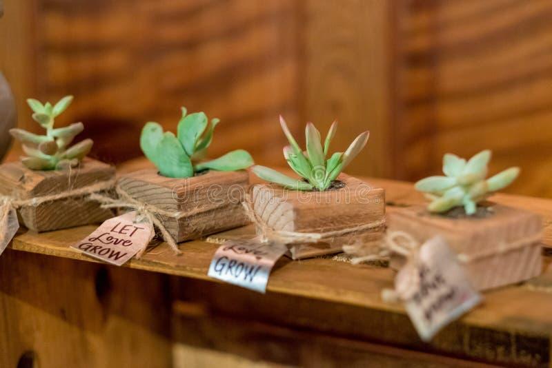 Succulents bij Huwelijksontvangst stock afbeelding