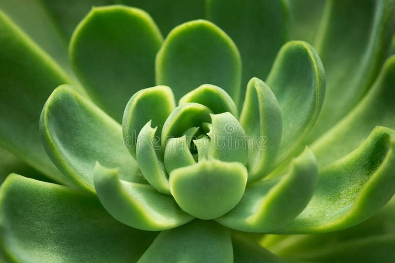 Succulents am botanischen Garten lizenzfreie stockfotos