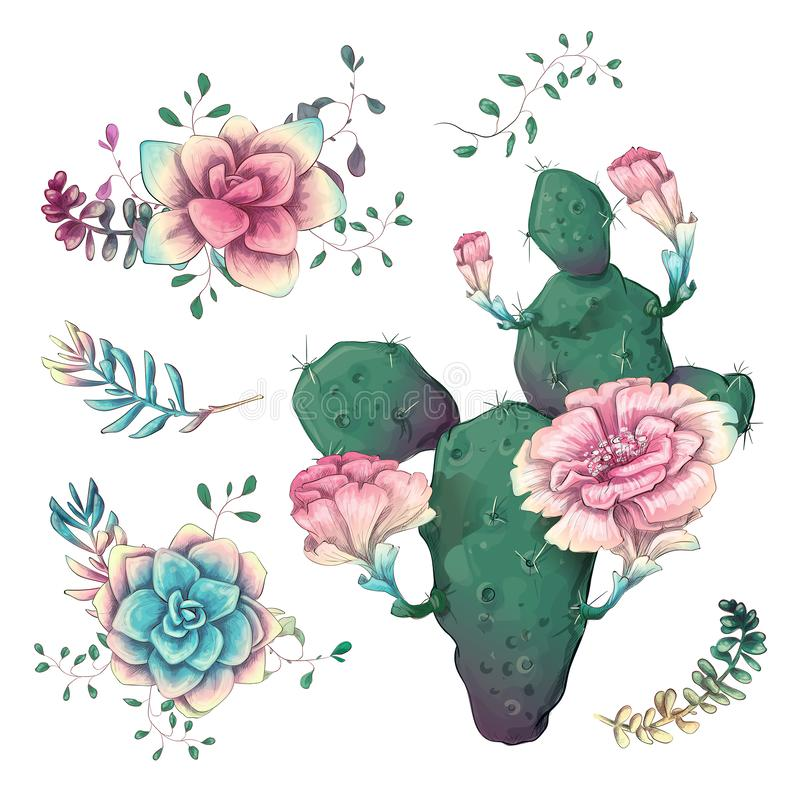 Succulents. Cacti hand drawn on a white background. Flowers in the desert. Vector drawing succulents vector illustration