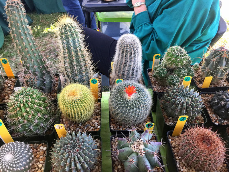 Succulents and cacti for sale stock image