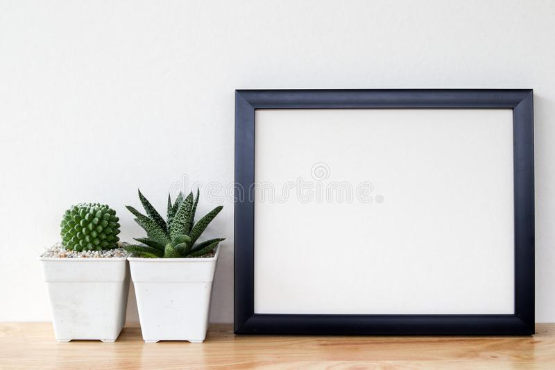 Succulents or cactus in concrete pots over white background on the shelf and mock up frame photo royalty free stock images