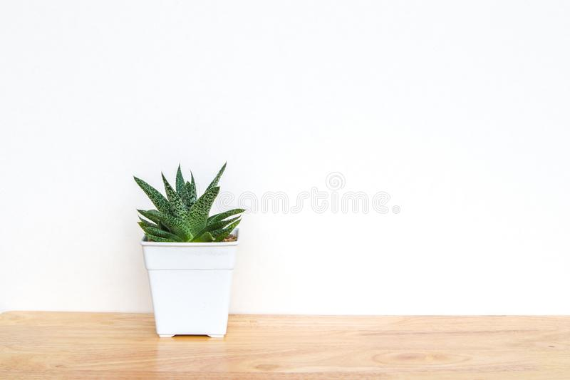 Succulents or cactus in concrete pots over white background on the shelf and mock up frame photo royalty free stock photo