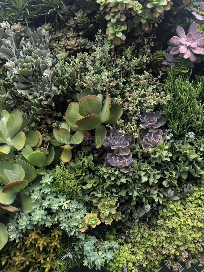 Succulents continus photographie stock