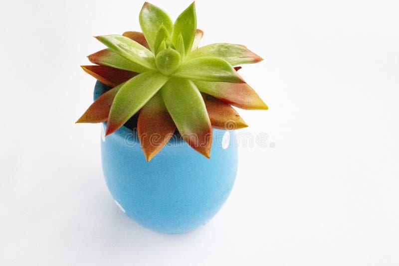 Succulents dans différents pots concrets sur l'étagère blanche photo stock