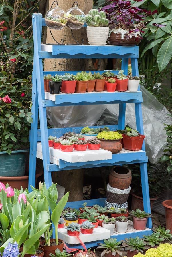 Succulents de cactus dans le jardin photo stock