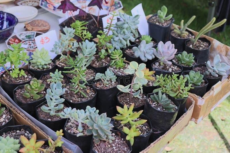 Succulents de cosecha propia para la venta fotografía de archivo