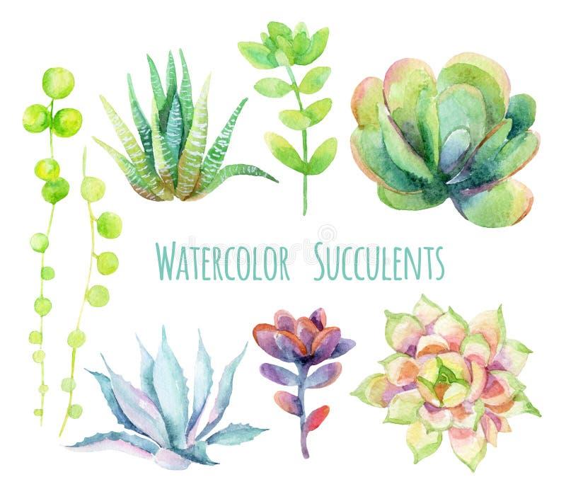Succulents de la acuarela stock de ilustración