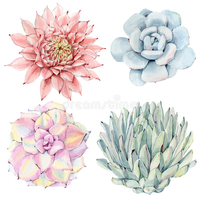 Succulents de vintage d'aquarelle réglés illustration libre de droits