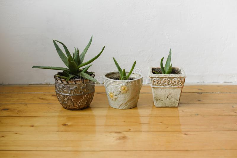 Succulents in different pots on a white background wall and the wooden floor. Home decor. stock images