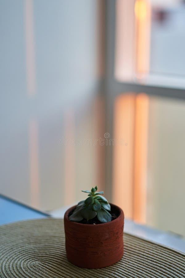 Succulents in einem Tongefäß angesichts des Sonnenuntergangs stockfotografie