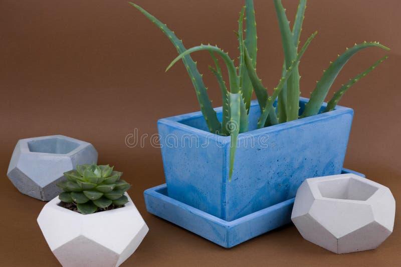 Succulents eingemacht in gemaltem konkretem Topf auf braunem Hintergrund stockbild