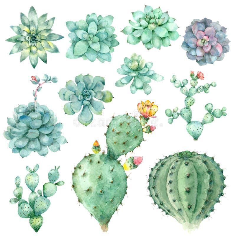 Succulents en acuarela libre illustration