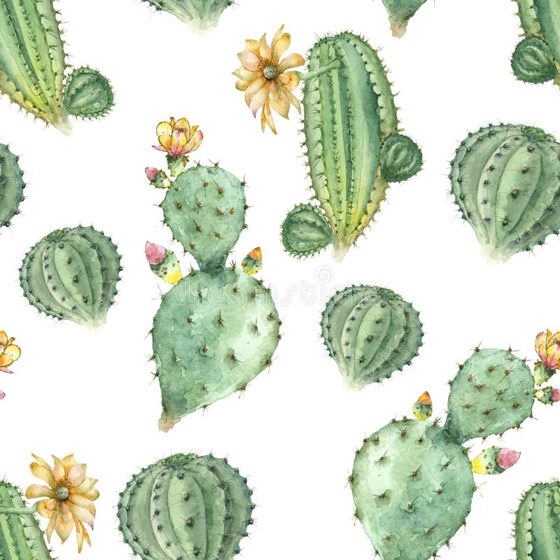 Succulents en acuarela libre illustration
