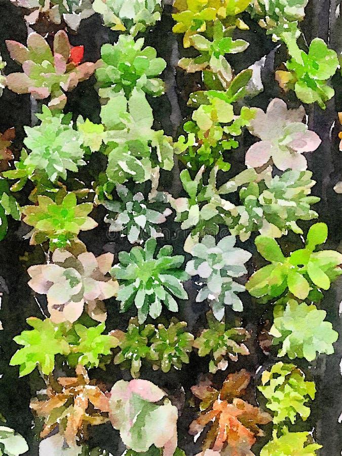 Succulents en acuarela fotografía de archivo libre de regalías