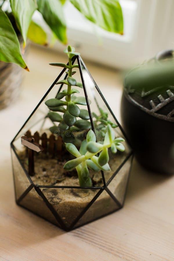 Succulents en cactus in concrete potten Skandinavisch binnenland stock afbeeldingen