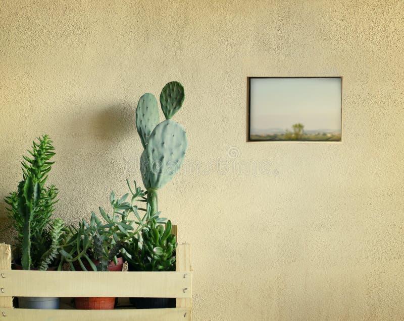 Succulents en cactussen royalty-vrije stock foto's