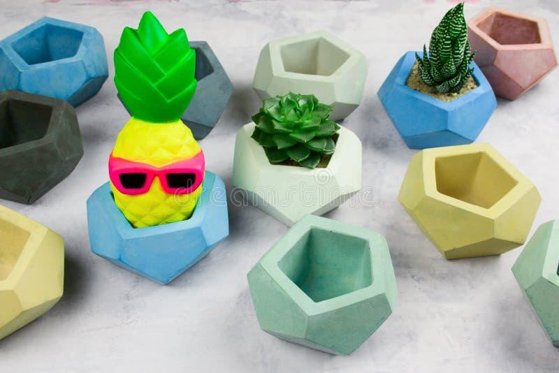 Succulents en conserva en potes concretos y piña divertida foto de archivo libre de regalías