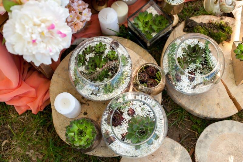 Succulents en la decoración interior de las bodas imágenes de archivo libres de regalías