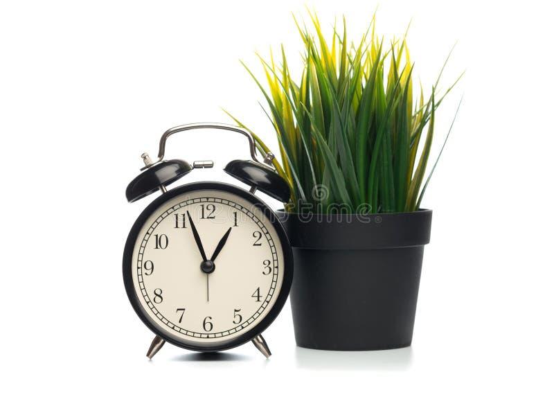 Succulents en zwarte die klok op witte achtergrond wordt geïsoleerd royalty-vrije stock afbeelding