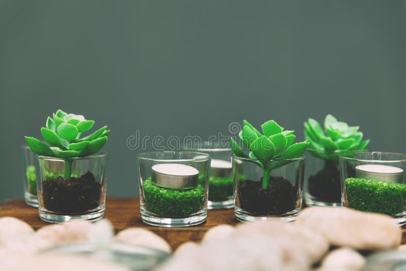 Succulents et candels verts en verres décoratifs photos libres de droits