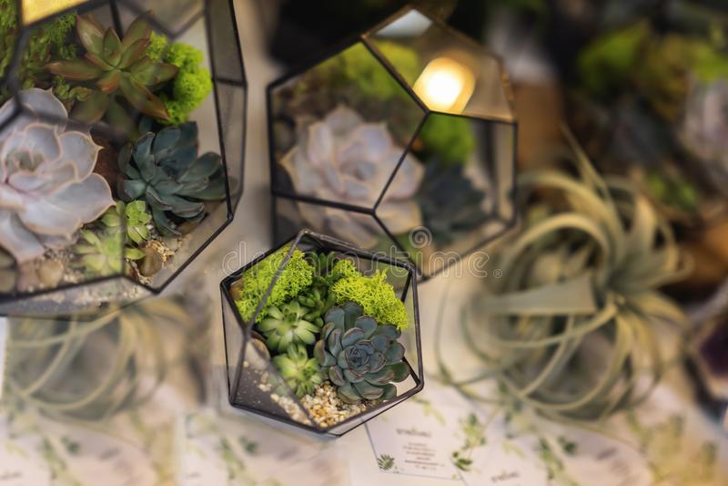 Succulents in florariums Creativiteit van het groeien succulents en cactussen, mooie samenstellingen Landschap in geomeric royalty-vrije stock foto