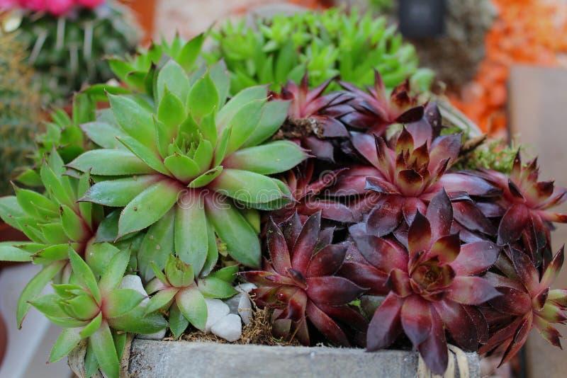 Succulents stock photos