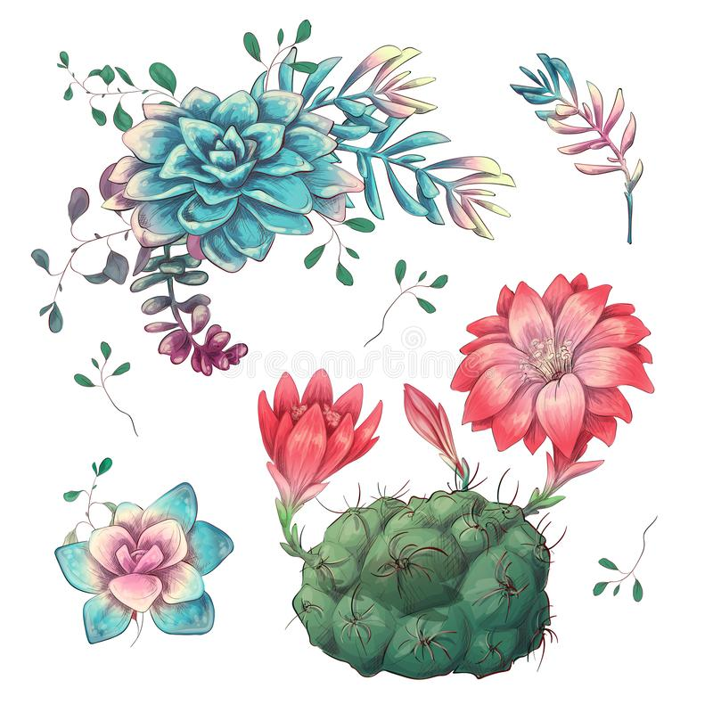succulents Los cactus dan dibujado en un fondo blanco Flores en el desierto Succulents de dibujo del vector ilustración del vector