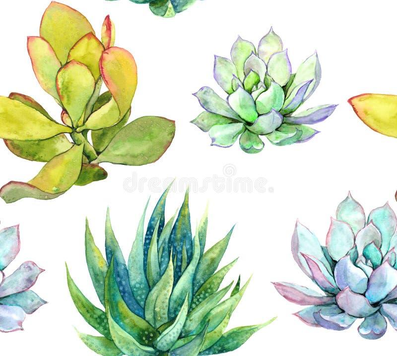 succulents Modelo inconsútil watercolor ilustración del vector