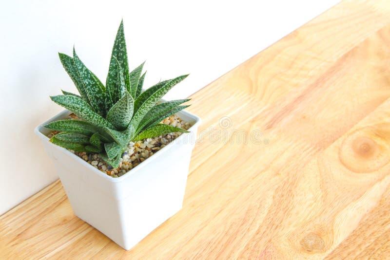 Succulents o cactus en potes concretos sobre el fondo blanco en el estante y la mofa encima de la foto del marco fotos de archivo libres de regalías