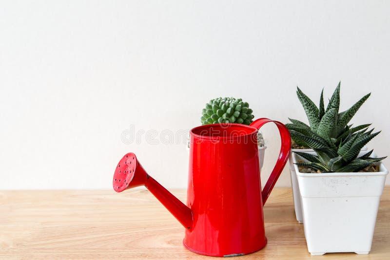 Succulents o cactus en potes concretos sobre el fondo blanco en el estante y la mofa encima de la foto del marco fotografía de archivo