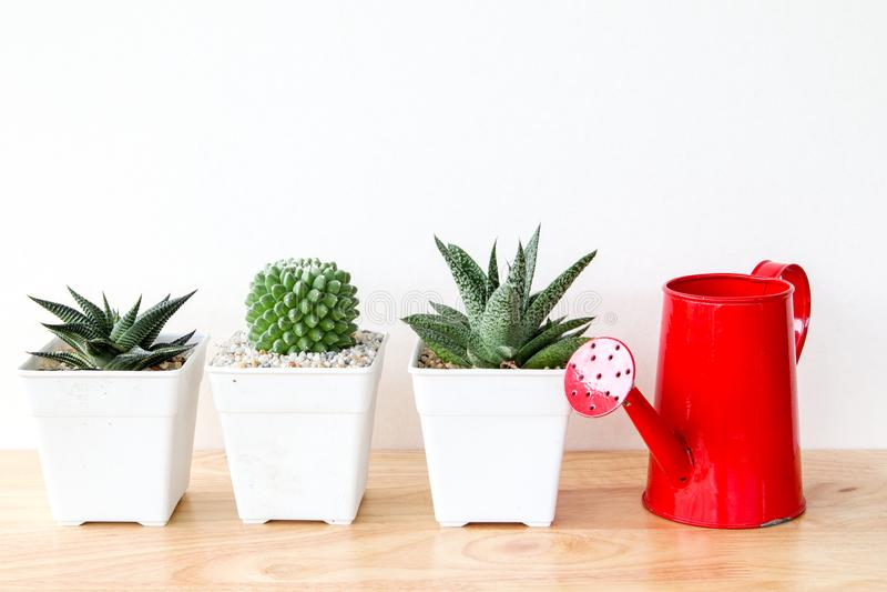 Succulents o cactus en potes concretos sobre el fondo blanco en el estante y la mofa encima de la foto del marco imágenes de archivo libres de regalías