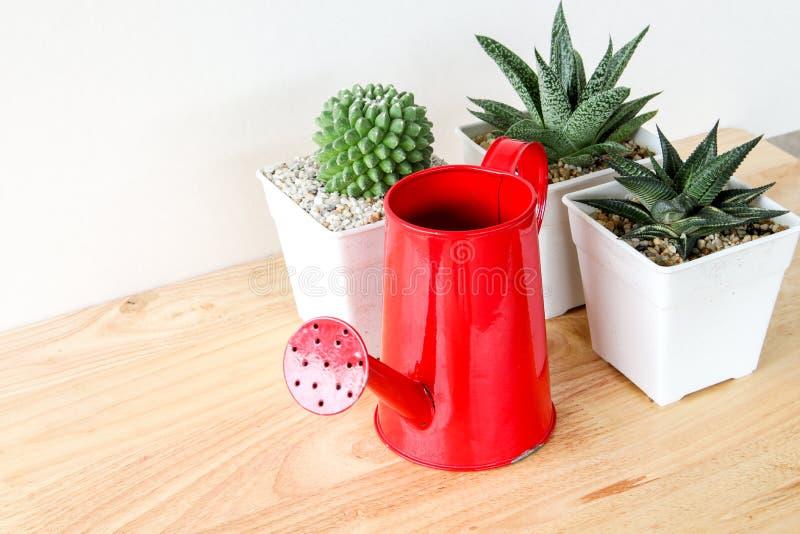 Succulents oder Kaktus in den konkreten Töpfen über weißem Hintergrund im Regal und Spott herauf Rahmenfoto lizenzfreies stockfoto