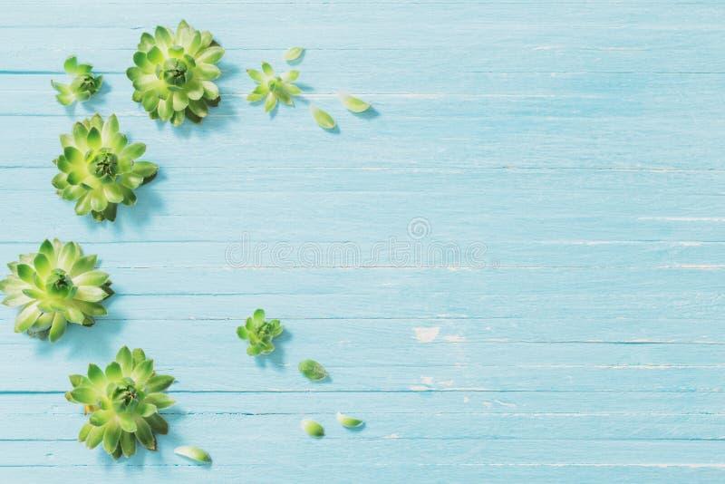 Succulents op oude blauwe houten achtergrond stock afbeelding