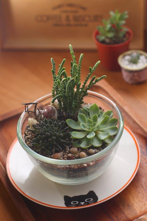 Succulents preciosos en bol de vidrio foto de archivo