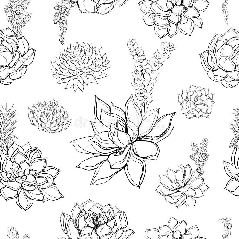 succulents Reticolo senza giunte grafici coloring Illustrazione di vettore royalty illustrazione gratis