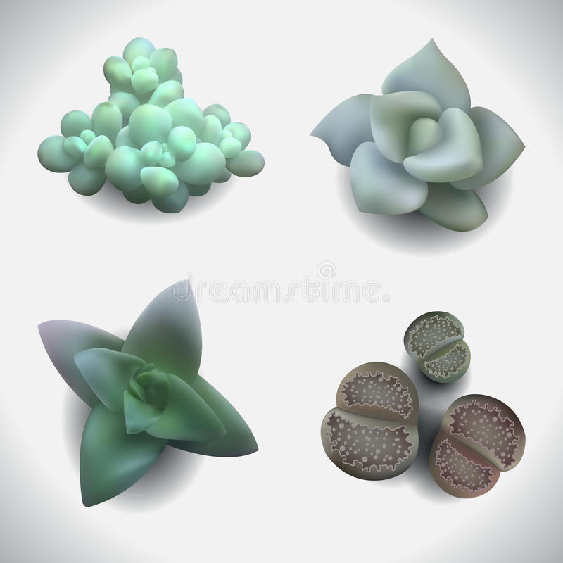 Free Succulents-set-2 Royalty Free Stock Photography - 63046507