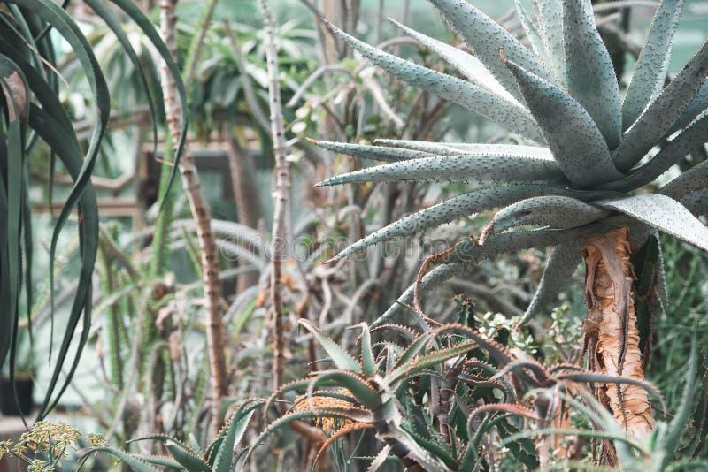 Succulents und Aloeanlagen stockfotos