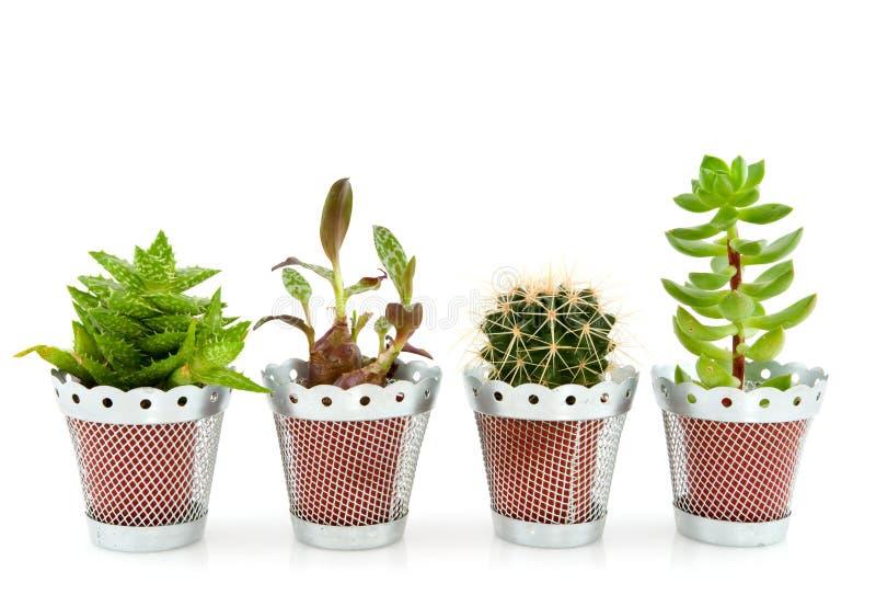 Succulents und Kaktus lizenzfreie stockfotos