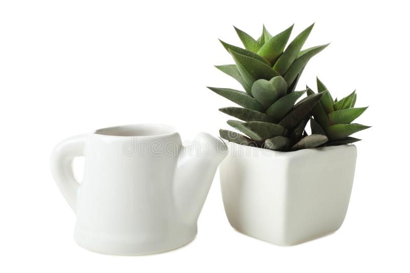 Succulents in white flowerpot and little teapot with water stock photo