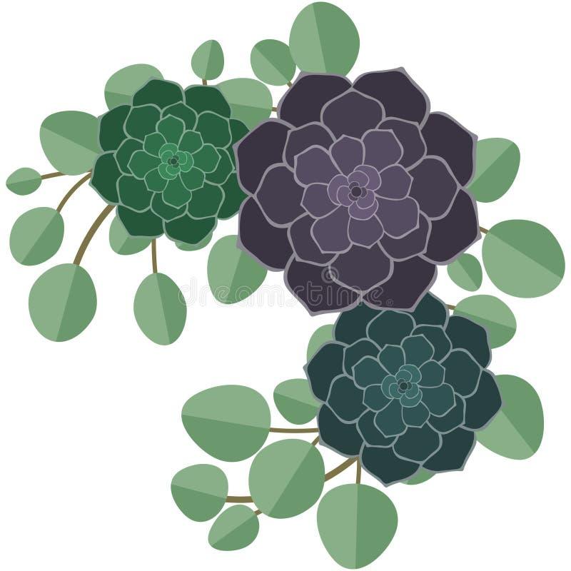 Succulents y ejemplo del eucalipto libre illustration
