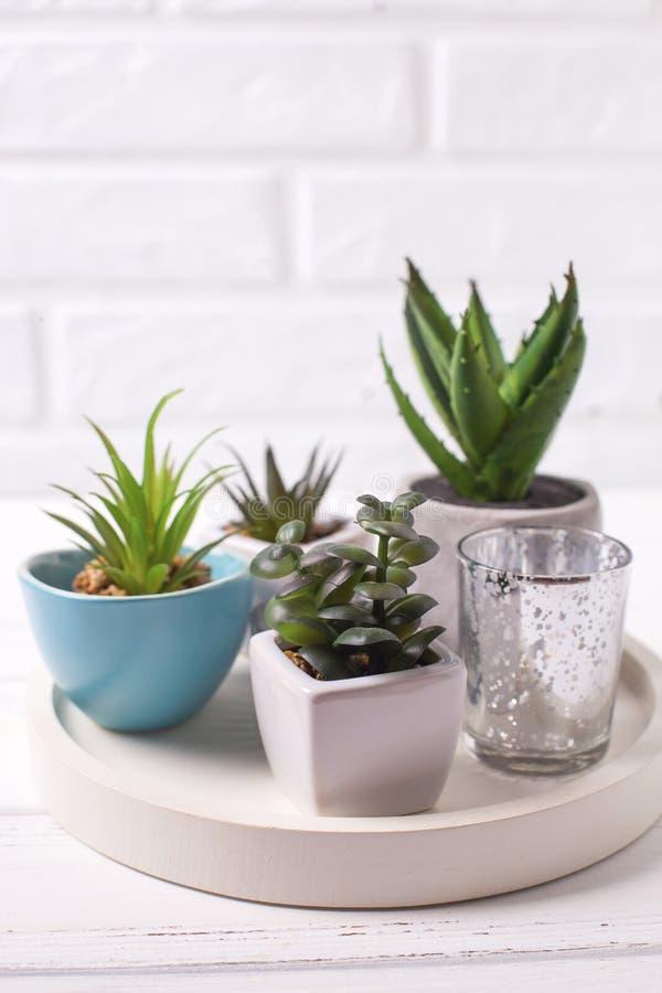 Succulents y plantas del cactus en potes en la bandeja imagen de archivo