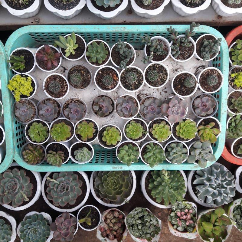 Succulentswinkel royalty-vrije stock foto