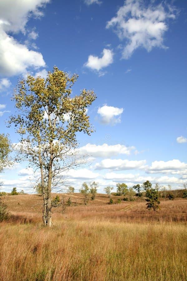 suchą trawę gleby zdjęcia stock